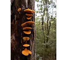 Orange tree fungus Photographic Print
