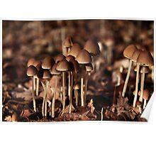 Autumn Fungi Convention Poster