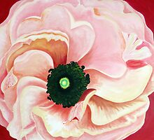 ranunculus by Deborah Green