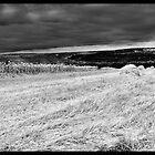 Ukrainian field. by Tutelarix