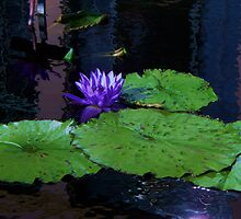 Blue Water Lily by schiabor