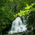 Forest Falls by peaceofthenorth