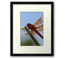 Smiling Dragonfly Iphone Case Framed Print