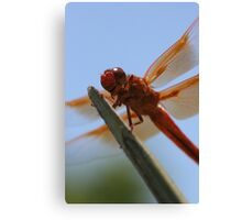 Smiling Dragonfly Iphone Case Canvas Print
