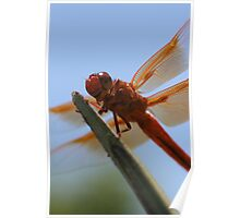 Smiling Dragonfly Iphone Case Poster