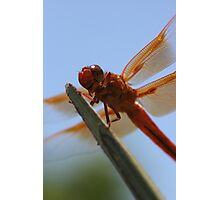 Smiling Dragonfly Iphone Case Photographic Print