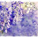 Wisteria Watercolor by Jessica Jenney