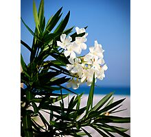White Oleander Photographic Print
