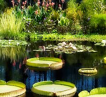 Fairest Lily Pond by Trudy Wilkerson