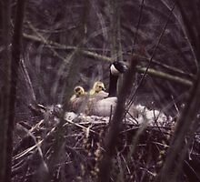 030207-2  THE BABYSITTER by MICKSPIXPHOTOS