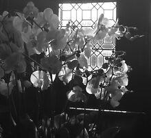Orchids 2 by jenniferanne