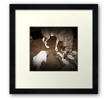 Meet your new brother Framed Print