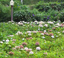 flower invasion  by pollyana correia