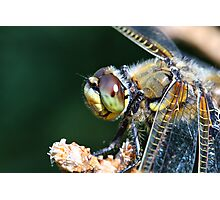Dragonfly Eye Photographic Print