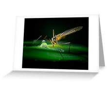 Insect, but whats my name? Greeting Card