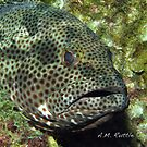 Fish Sleep? by A.M. Ruttle