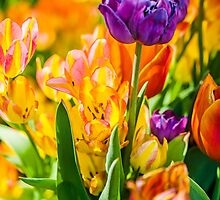 Tulips Enchanting 01 by luckypixel