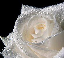 White Diamonds by Theresa Elvin