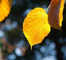 Winter leaves by Jaime Pharr
