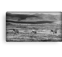 Zebra Arcade Canvas Print