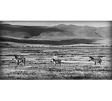 Zebra Arcade Photographic Print