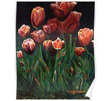 Multicolor Tulips Poster