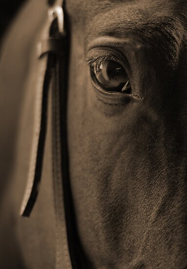 Tender Look in Sepia by Johanne Brunet