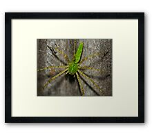 Mr. Spike Framed Print