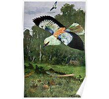 Blue Roller Bird Art Poster