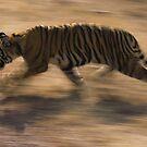 Run! by KitPhoto