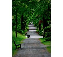 Path in The Park Photographic Print