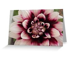 Purple And White Dahlia Greeting Card