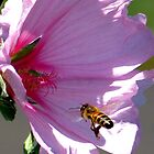 Bee Line to the Center by Chuck Gardner