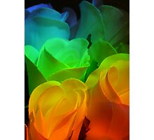 Rows of Rainbow Roses Photographic Print