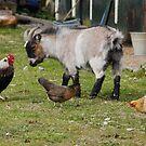 Mixed Farmyard by AnnDixon