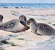 Vintage Seals on the Beach Art by goldenmenagerie