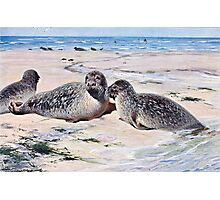 Vintage Seals on the Beach Art Photographic Print