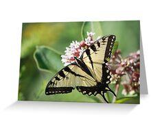 Eastern Tiger Swallowtail Greeting Card