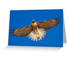 0627092 Red Tailed Hawk Greeting Card