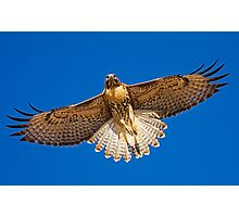 0627092 Red Tailed Hawk Photographic Print