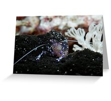Shrimp on a black anemone Greeting Card