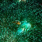 Coral Reef Andaman Sea Thailand 3 by KOKOPEDAL