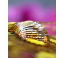 Gold Lust Photographic Print