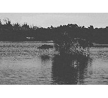 Nature in BW Photographic Print