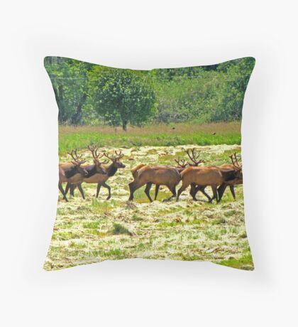 Eight Bull Elk All in Velvet  Throw Pillow