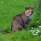 Farm Cat....... by lynn carter