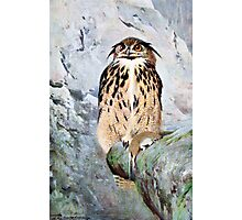 Horned Owl Vintage Illustration Photographic Print