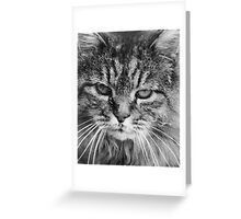 Willow B&W Greeting Card