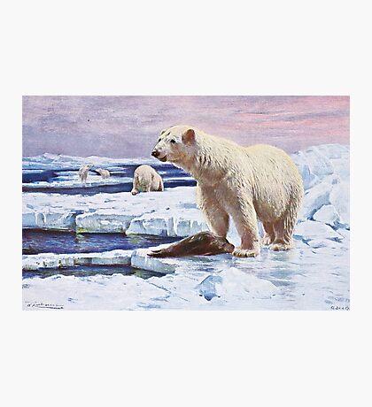 Polar Bears on Ice Floes Art Photographic Print