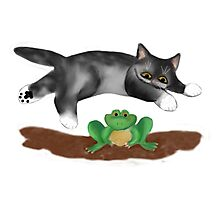 Gray Kitten Jumps over Frog Photographic Print